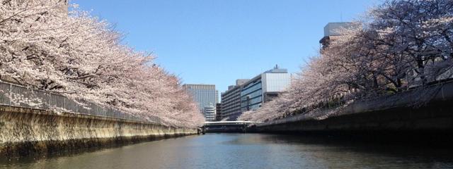東京桜まつりクルージング特集&3月のイベント